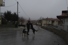 Mortis the dog and his friend welcomes visitors! Vlasti, Greece